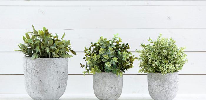 Jak sadzić w betonowych donicach?