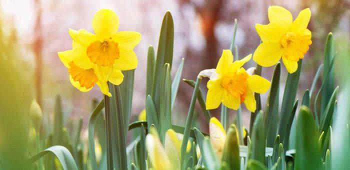 Wielkanocna symbolika w wiosennym ogrodzie